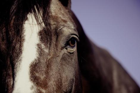 horse-ride-reiter-equestrian-39289